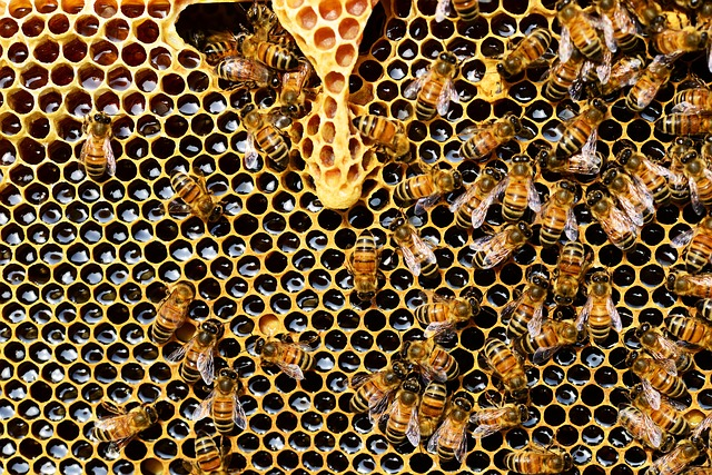 Včelí produkt není jen med